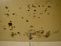 KIKI SCHMALFUSS/THE HOYA | In response to a steep rise in mold reported in dormitories, Georgetown conducted cleanings of approximately 920 bathroom.